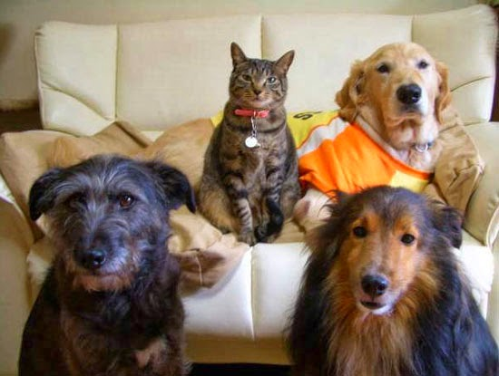 Where's the cuttie cat, between or among the dogs?